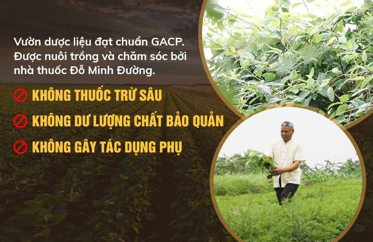 Đảm bảo nguồn gốc dược liệu sạch, đạt chuẩn GACP-WHO